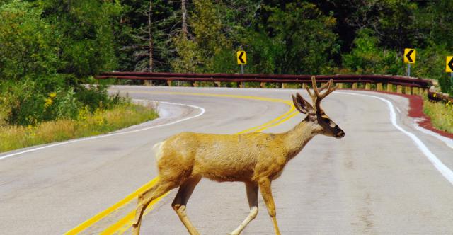How To Avoid Wildlife Accidents This Season